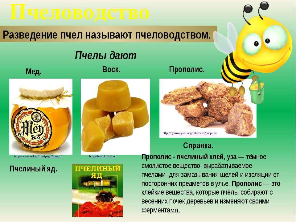 Пчеловодство Разведение пчел называют пчеловодством. Мед. Воск. http://www.ri...