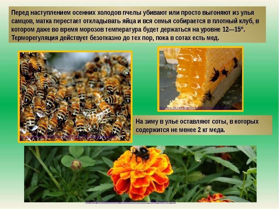 Перед наступлением осенних холодов пчелы убивают или просто выгоняют из улья ...