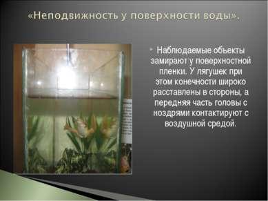 Наблюдаемые объекты замирают у поверхностной пленки. У лягушек при этом конеч...