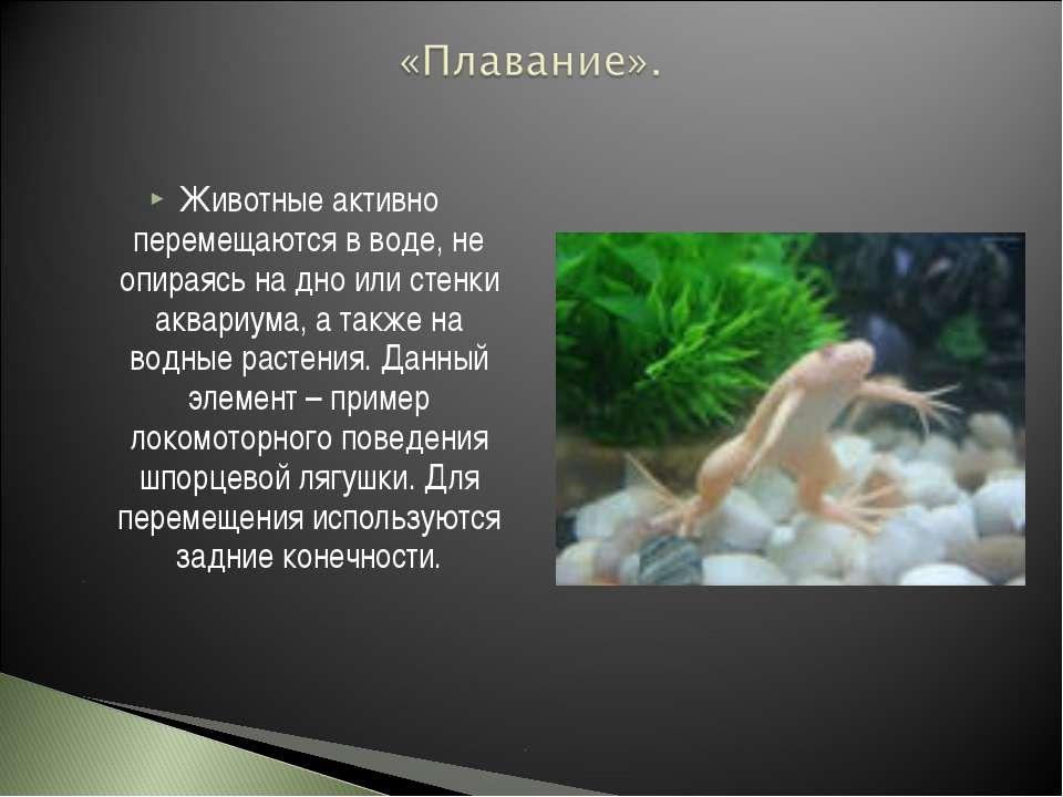 Животные активно перемещаются в воде, не опираясь на дно или стенки аквариума...