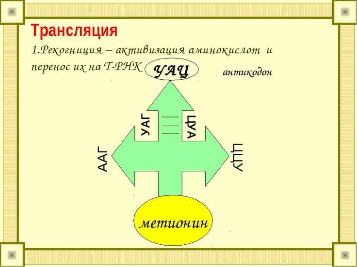 Трансляция 1.Рекогниция – активизация аминокислот и перенос их на Т-РНК метио...