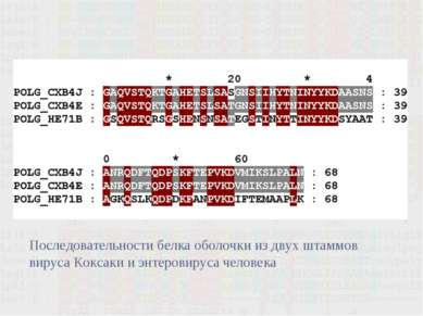 .. Последовательности белка оболочки из двух штаммов вируса Коксаки и энтеров...