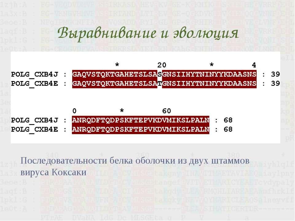 Выравнивание и эволюция Последовательности белка оболочки из двух штаммов вир...