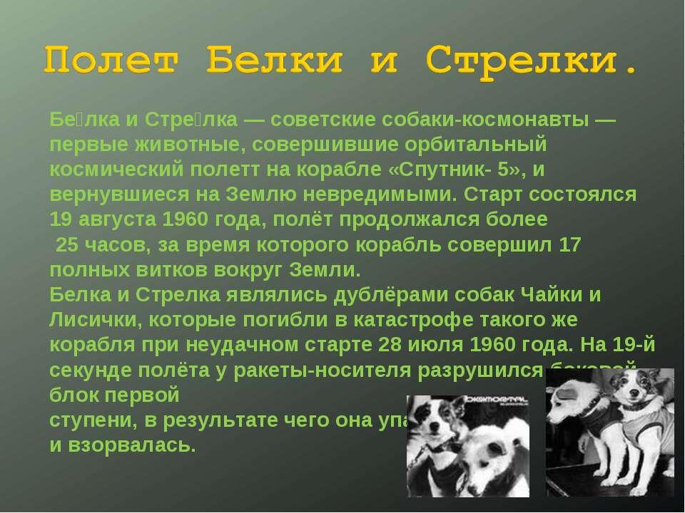 Бе лка и Стре лка— советские собаки-космонавты— первые животные, совершивши...
