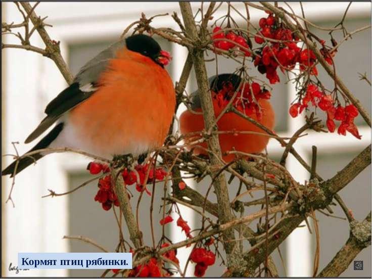 Небо серое с утра, Падают снежинки, Спят деревья и кусты, Кормят птиц рябинки.