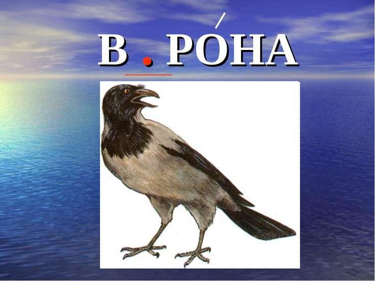 В . РОНА