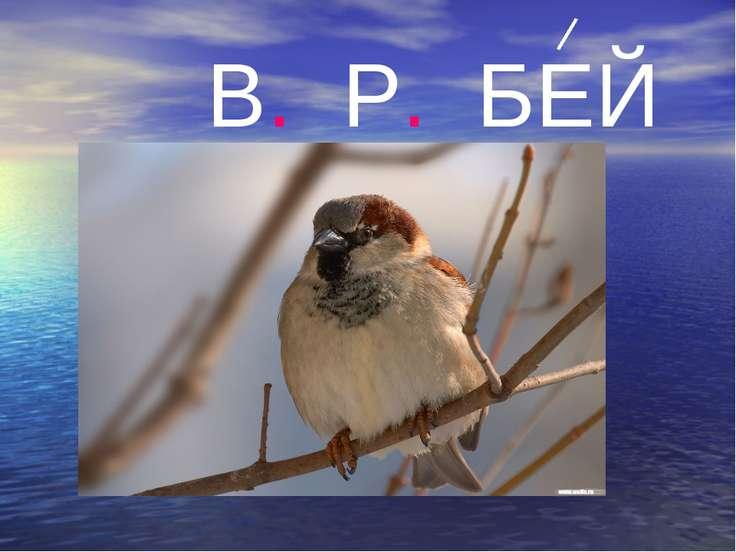 В. Р. БЕЙ
