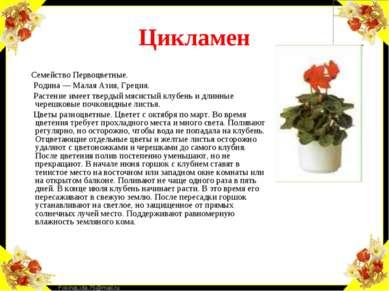 Цикламен Семейство Первоцветные. Родина — Малая Азия, Греция. Растение имеет ...