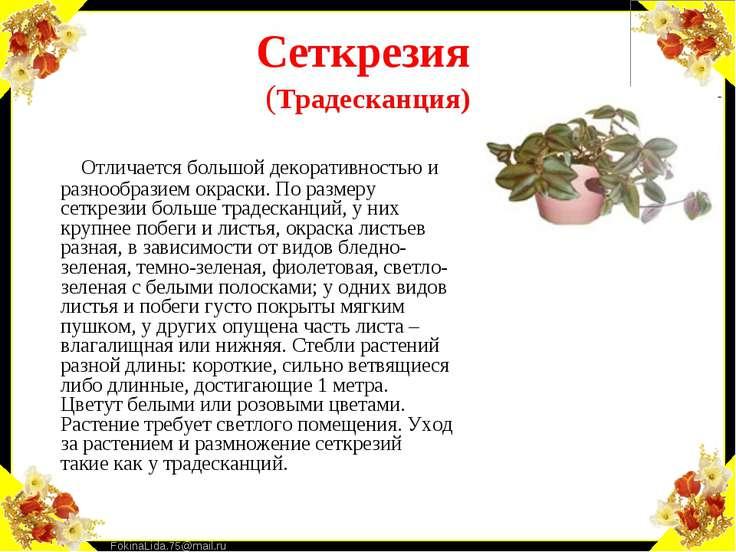 Сеткрезия (Традесканция) Отличается большой декоративностью и разнообразием о...