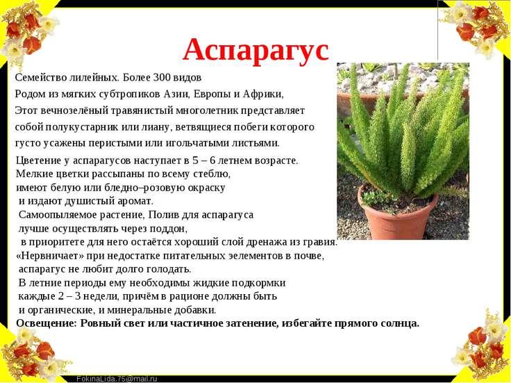 Аспарагус Семейство лилейных. Более 300 видов Родом из мягких субтропиков Ази...