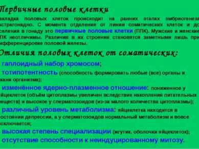 гаплоидный набор хромосом; тотипотентность (способность формировать любые (вс...