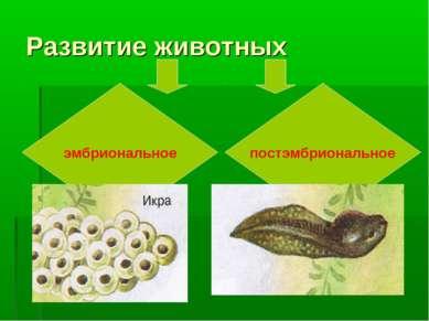 Развитие животных эмбриональное постэмбриональное