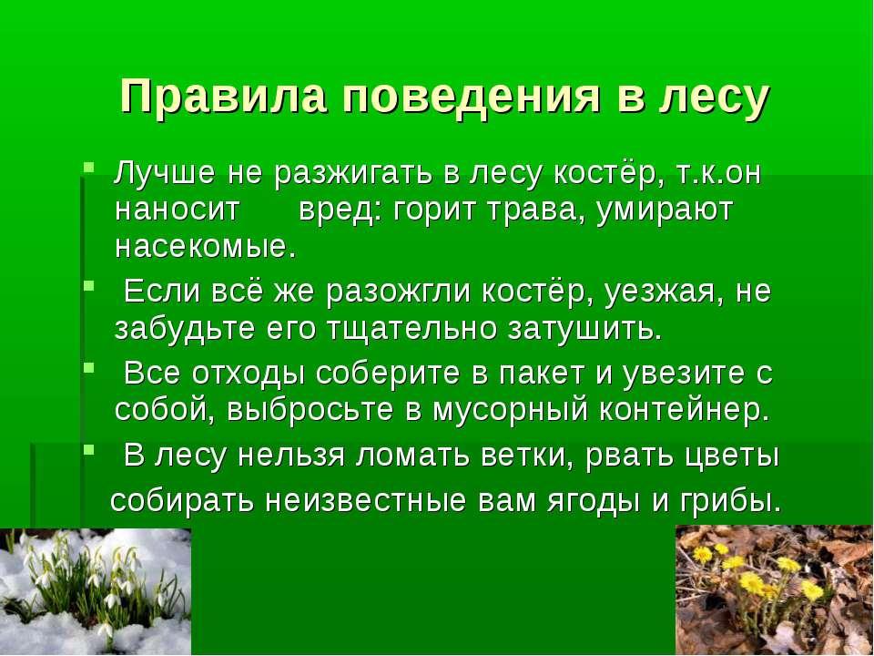 Правила поведения в лесу Лучше не разжигать в лесу костёр, т.к.он наносит вре...
