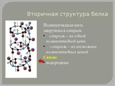 Вторичная структура белка Полипептидная нить закручена в спираль α-спираль – ...