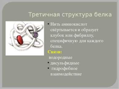 Третичная структура белка Нить аминокислот свёртывается и образует клубок или...