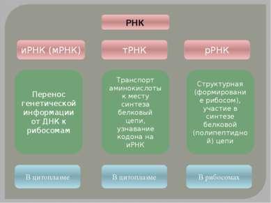 иРНК (мРНК) тРНК рРНК РНК Перенос генетической информации от ДНК к рибосомам ...