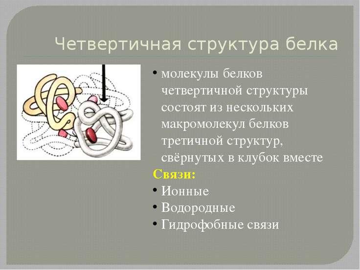 Четвертичная структура белка молекулы белков четвертичной структуры состоят и...