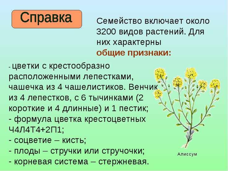 Семейство включает около 3200 видов растений. Для них характерны общие призна...