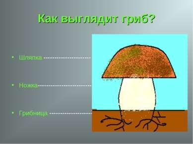 Как выглядит гриб? Шляпка ---------------------- Ножка-----------------------...