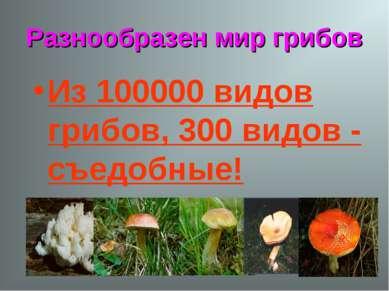 Разнообразен мир грибов Из 100000 видов грибов, 300 видов - съедобные!