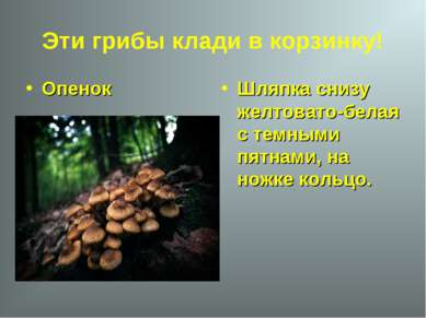 Эти грибы клади в корзинку! Опенок Шляпка снизу желтовато-белая с темными пят...
