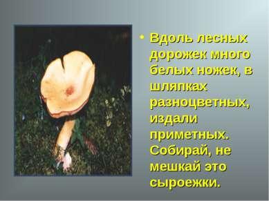 Вдоль лесных дорожек много белых ножек, в шляпках разноцветных, издали примет...