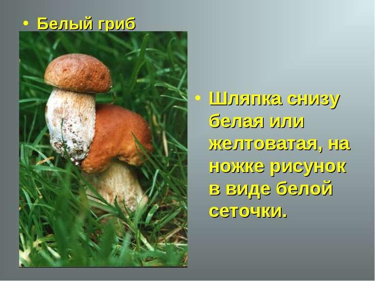 Белый гриб Шляпка снизу белая или желтоватая, на ножке рисунок в виде белой с...