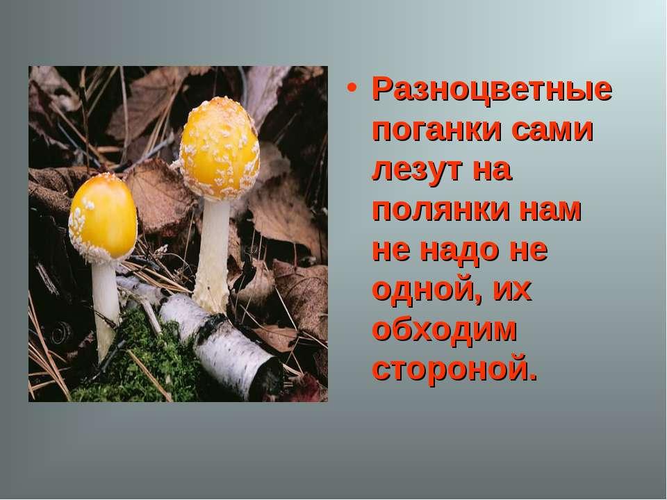 Разноцветные поганки сами лезут на полянки нам не надо не одной, их обходим с...