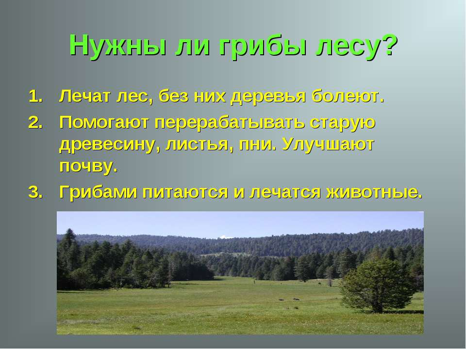 Нужны ли грибы лесу? Лечат лес, без них деревья болеют. Помогают перерабатыва...