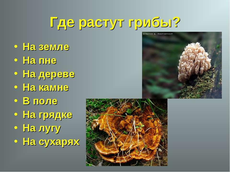 Где растут грибы? На земле На пне На дереве На камне В поле На грядке На лугу...