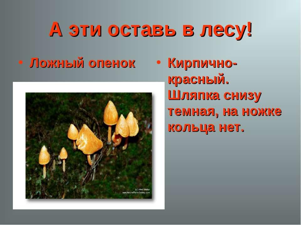 А эти оставь в лесу! Ложный опенок Кирпично-красный. Шляпка снизу темная, на ...
