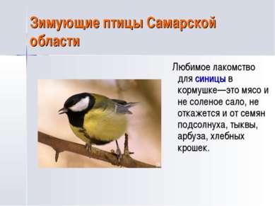 Зимующие птицы Самарской области Любимое лакомство для синицы в кормушке—это ...