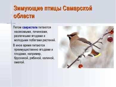Зимующие птицы Самарской области Летом свиристели питаются насекомыми, личинк...