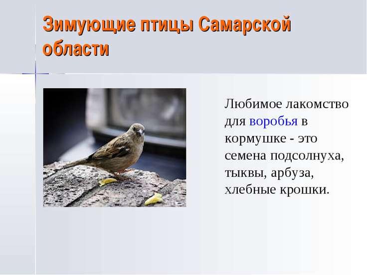 Зимующие птицы Самарской области Любимое лакомство для воробья в кормушке - э...