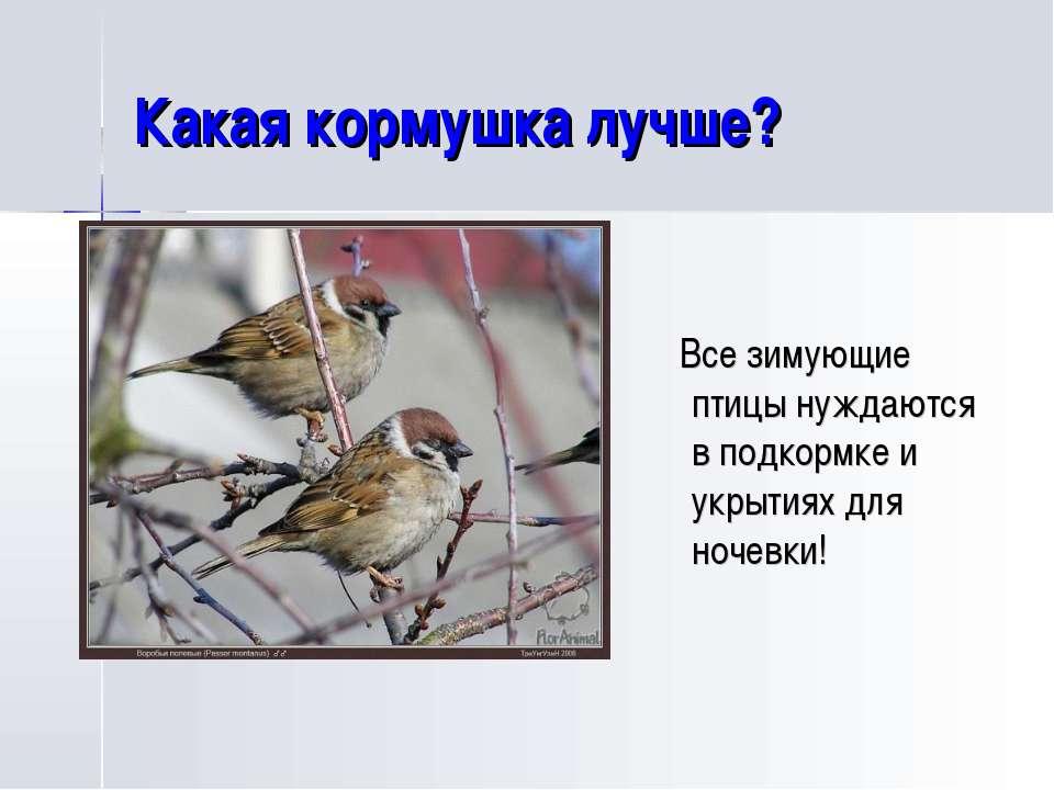 Какая кормушка лучше? Все зимующие птицы нуждаются в подкормке и укрытиях для...