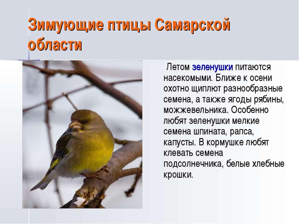 Зимующие птицы Самарской области Летом зеленушки питаются насекомыми. Ближе к...