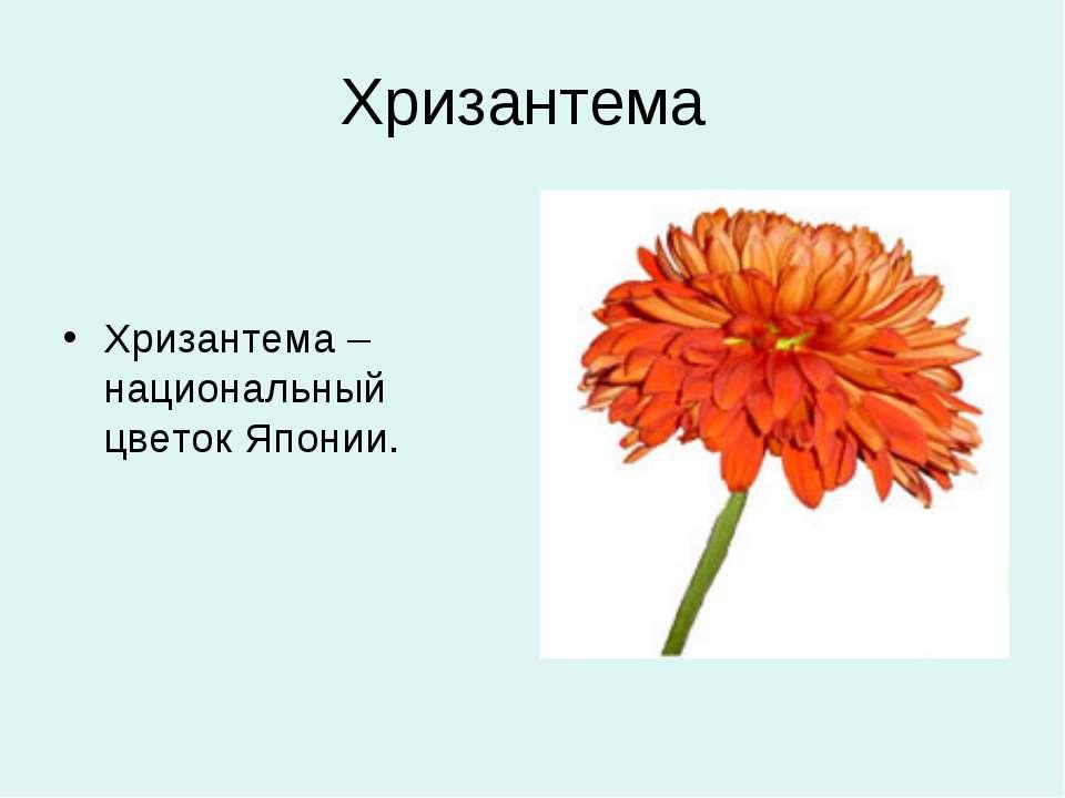 Хризантема Хризантема – национальный цветок Японии.