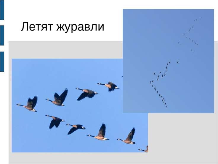 Летят журавли