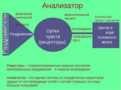 Анализатор Раздражители Раздражение физический химический процессы Орган чувс...