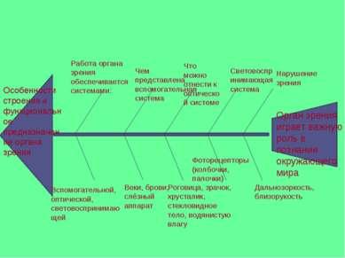 Особенности строения и функциональное предназначение органа зрения Работа орг...