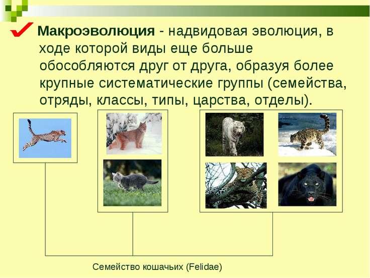 Макроэволюция - надвидовая эволюция, в ходе которой виды еще больше обособляю...
