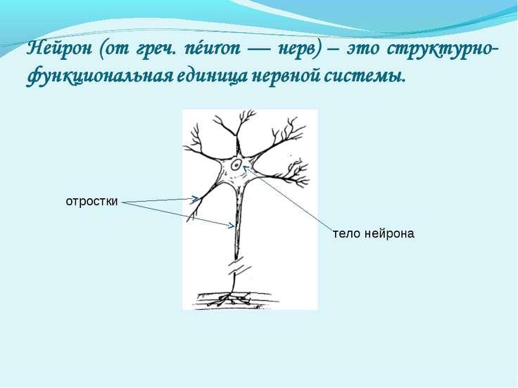 тело нейрона отростки