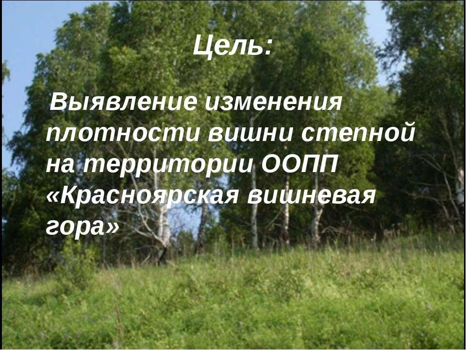 Цель: Выявление изменения плотности вишни степной на территории ООПП «Красноя...
