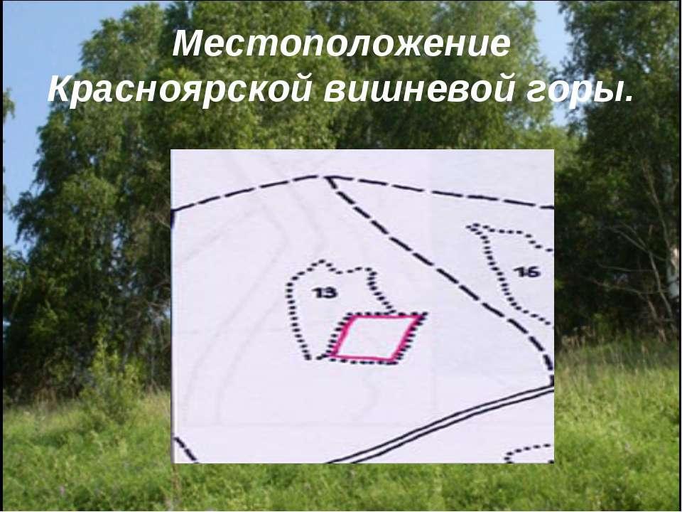 Местоположение Красноярской вишневой горы.