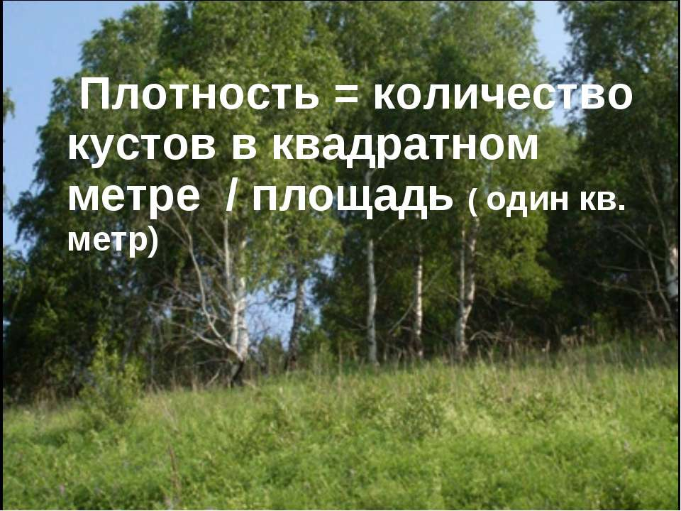 Плотность = количество кустов в квадратном метре / площадь ( один кв. метр)