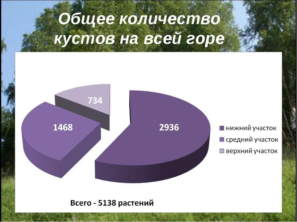 Общее количество кустов на всей горе