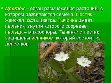 Цветок – орган размножения растений, в котором развиваются семена. Пестик – ж...