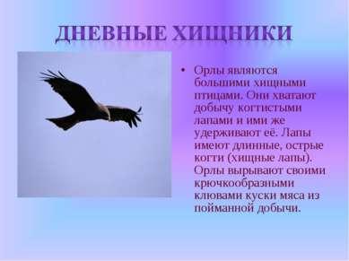 Орлы являются большими хищными птицами. Они хватают добычу когтистыми лапами ...