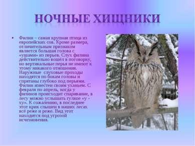 Филин – самая крупная птица из европейских сов. Кроме размера, отличительным ...