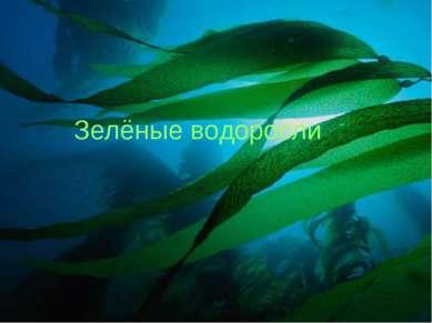 Зелёные водоросли Зелёные водоросли